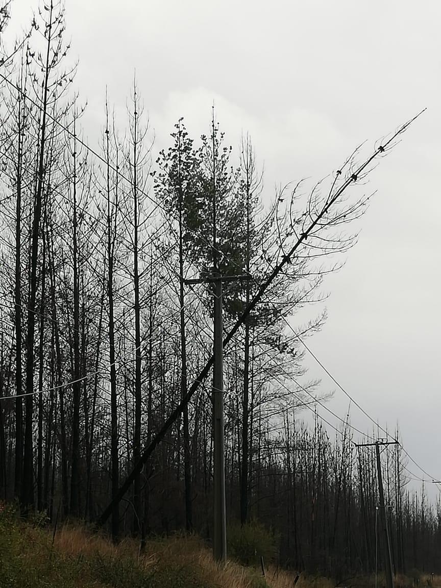 Caída de árboles sobre tendido eléctrico afecta a Hualañé